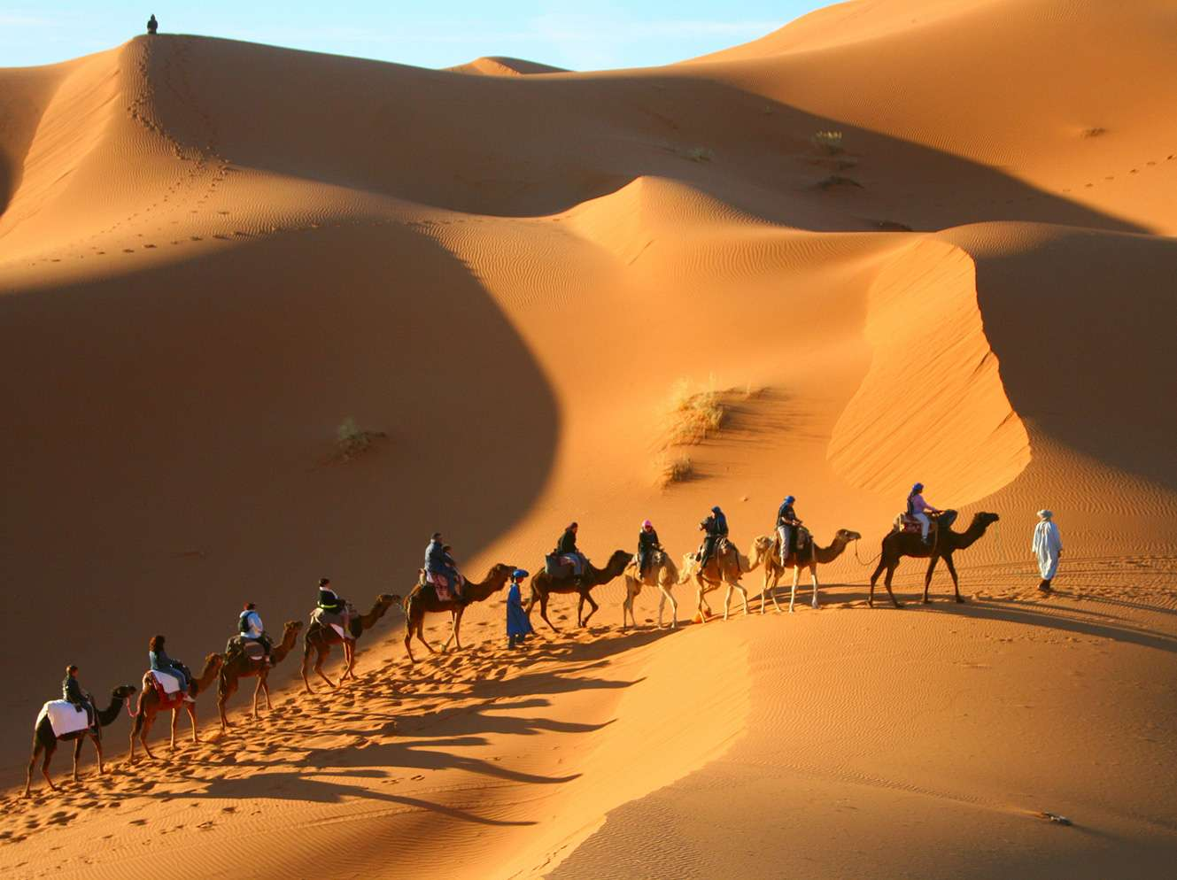 Camel Excursions Morocco